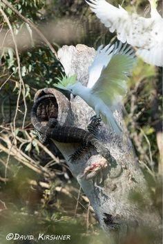 Meanwhile In Australia, Bird, Animals, Animales, Animaux, Birds, Animal, Animais, Dieren