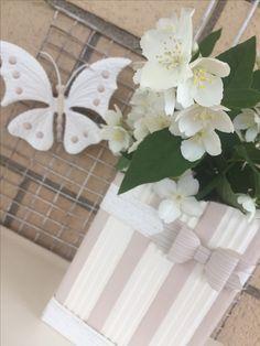 Philadelphus Coronarius,candidi fiori conosciuti anche come Fiore D'angelo oppure Gelsomino della Madonna