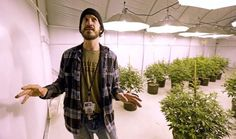 Growers struggle with glut of legal pot in Washington state - MSN NEWS #Washington, #Marijuana