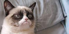 Desfavor Explica: Educando Gatos. | desfavor