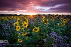 Flowers of Light by raphaelmessmer #landscape #travel
