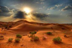Afternoon in Baja California's Sonora desert