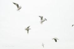 Die Raumfee: In heaven No. 152 - Möven... von oben herab // Seagulls