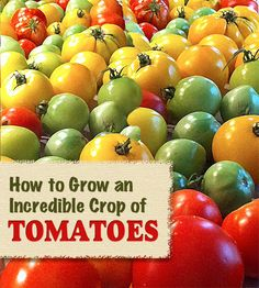 Check out Pretty Handy Girl's tips on planting and staking tomatoes. Think salsa, salads, sandwiches--summer on a plate!