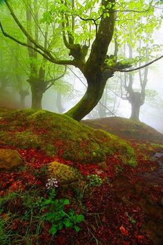 New Wonderful Photos: Mystical Forest, Gorbea, Spain Foto Nature, All Nature, Amazing Nature, Beautiful World, Beautiful Places, Beautiful Pictures, Nature Pictures, Magic Places, Parque Natural