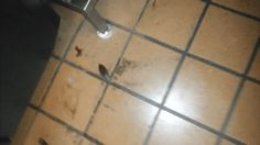 8.) Oh, look, a little cockroach....OMG OMG OMG.