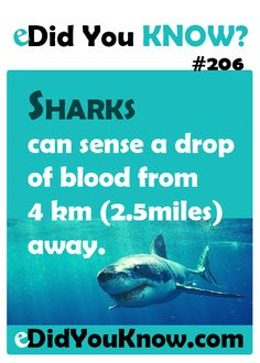 http://edidyouknow.com/did-you-know-206/ Sharks can sense a drop of blood from 4km (2.5miles) away.