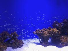 #fish #nature #aquarium #blue Nature Aquarium, Ads, Photo And Video, Videos, Blue, Instagram