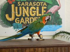 Sarasota Jungle Garden. Great for families and toddlers.