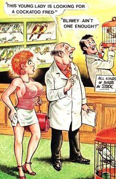 Funny Long Jokes, Funny Postcards, Cockatoo, Twisted Humor, Erotic Art, Cartoon Art, Seaside, Comedy, Joker
