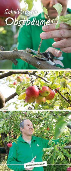 Die 23 Besten Bilder Von Apfelbaumpflege Veggie Gardens Fruit