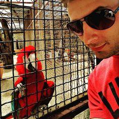 #parrot #fun #sunnydays #onlyred by matija2712ms http://www.australiaunwrapped.com/