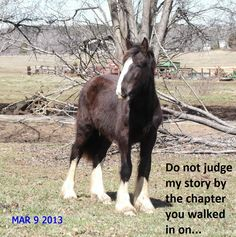 Be Inspired! Shire Horse, Argo, Moonlight, Goats, Horses, Puppies, Inspired, Animals, Cubs