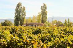 Chile, Santa Cruz, Valle Colchagua Chile, Bucket, Mountains, Nature, Travel, Santa Cruz, First Night Romance, Tourism, Naturaleza