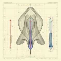 So cool :) Macoto Murayama's Intricate Blueprints of Flowers - A front view of Lathyrus odoratus L. 2009-2012. By Macoto Murayama. Image courtesy of Frantic Gallery.