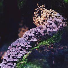 "silvis-silentii: ""#грибы #лес #природа #mushroom #mushrooms #forest #wood #nature """