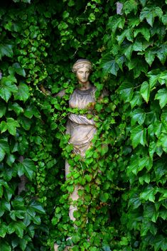Statue at Belton House, Lincolnshire, England. Vines creeping over a statue. Dream Garden, Garden Art, Garden Design, Garden Statues, Garden Sculpture, Belton House, The Secret Garden, Ivy House, Enchanted Garden