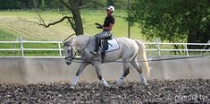 sitzuebungen-uta-graef Horseback Riding, Equestrian, Pony, Horses, Animals, Fitness Workouts, Trail, Cookie, Island Horse