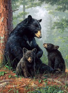 beautiful animal art - Hautman Bros Naptime Licensed 48 x 60 Woven Tapestry Throw by The Northwest Company Bear Paintings, Wildlife Paintings, Wildlife Art, Art D'ours, Animals And Pets, Cute Animals, Bear Decor, Love Bear, Tier Fotos