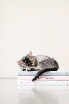 pattes de velours 🐾 le petit chat the little cat chaton gris grey kitty Cute Kittens, Cats And Kittens, Kittens Meowing, Cats 101, I Love Cats, Crazy Cats, Baby Animals, Cute Animals, Jungle Animals
