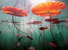 I adore this gorgeous nature photography art! Inspiration Art, Art Inspo, Underwater Photography, Nature Photography, Underwater Plants, Foto Art, Fantasy Landscape, Concept Art, Scenery