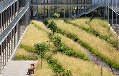 30 Ideas For Roof Landscape Design Grass Modern Landscape Design, Landscape Architecture Design, Landscape Artwork, Modern Landscaping, Fantasy Landscape, Landscaping Plants, Cool Landscapes, Urban Landscape, Landscape Bricks