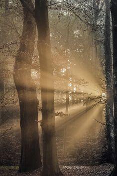 Waar begin je? Er is zoveel te zien, zoveel te fotograferen. Op zoek naar dat ene stukje schoonheid van het bos waar je loopt, en dat je mooi wilt vastleggen. Soms is het makkelijker gezegd dan gedaan. Een bos is vaak chaotisch en rommelig. Orde scheppen lijkt een moeilijk en onbegonnen werk. En dat is precies wat het fotograferen in de bossen zo moeilijk maakt, waar moet je beginnen…?  Lees verder ... Country Roads