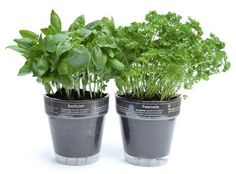 Growing your own Medicine---a Series on Growing Herbs that Heal