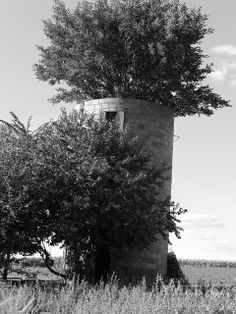 Tree growing out of old silo | Flickr - Photo Sharing!