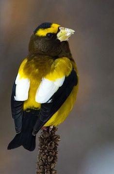 Most Beautiful Birds, Pretty Birds, Beautiful Butterflies, Love Birds, Tropical Birds, Exotic Birds, Colorful Birds, Owl Bird, Bird Art