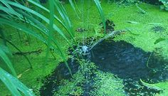 Water. Yellow, Water, Garden, Plants, Gripe Water, Garten, Flora, Plant, Lawn And Garden