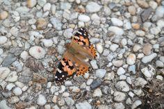Een vlinder met veertjes, rust even uit, september.... het einde nadert.