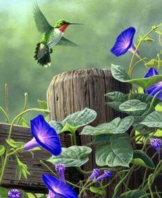 Ideas humming bird drawing hummingbirds watercolor painting for 2020 Ideas humming bird drawing hummingbirds watercolor painting for 2019 Pretty Birds, Beautiful Birds, Watercolor Bird, Watercolor Paintings, Images Colibri, Morning Glory Flowers, Hummingbird Pictures, Hummingbird Painting, Bird Drawings