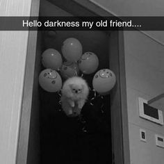 Hello darkness my old friend. Balloons. Meme. This is Lillian Stewart