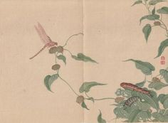 Dragonfly and Larva by Mori Shunkei (active 1800-1820)