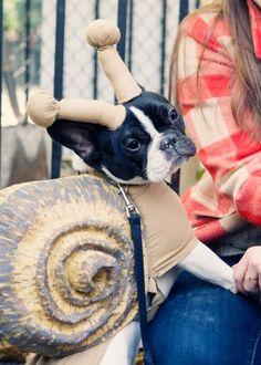 snail dog costume, french bulldog, tompkins square park halloween dog parade