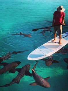 Standup paddle boarding with sharks #sup #paddleboard #shark