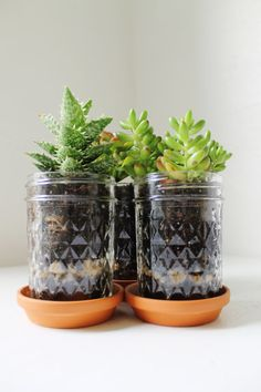 Mason Jar Planter Trio~Another idea for all those Mason jars! Mason Jar Herbs, Pot Mason Diy, Mason Jar Herb Garden, Mason Jar Planter, Mason Jars, Glass Jars, Mason Jar Projects, Mason Jar Crafts, Upcycled Crafts