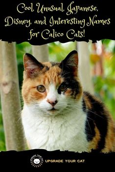 65 Pet Name Ideas Pet Names Cat Names Kitten Names