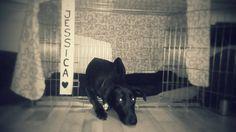 Klec pes Jessica dog pelíšek