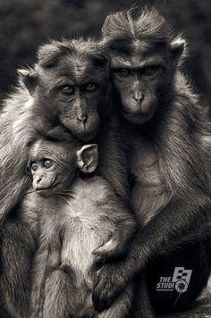 Monkeys together