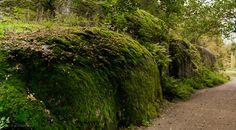Moss wall by Stas Kirenkov