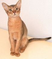 Cat Peeing Everywhere 10 Reasons Why your cat or kitten stopped using the litter box     House Training Kittens to use the litter box Clean Cat Urine Odor - Homemade recipe ts?    Free Homemade Recipe for Cleaning Pet Urine  Smells and Stains Click Here
