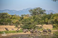 Biodiversity is the variety of plant and animal life in our world or a particular habitat that is considered to be important and desirable Soil And Water Conservation, Private Safari, Carbon Sequestration, Sustainable Environment, Private Games, Baboon, Game Reserve, African Safari