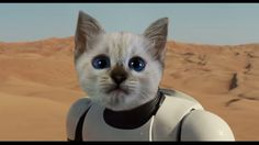 Star Wars The Force Awakens Teaser Trailer - Cat Reaction & Review