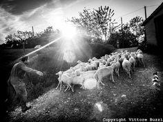Vittore Buzzi Photography, reportage, Italy, Farmer, Sheeps