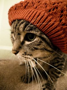 Gotta find my tabby kitty a hat like this one Hipster cat Crazy Cat Lady, Crazy Cats, I Love Cats, Cool Cats, Hate Cats, Pet Shop, Baby Animals, Cute Animals, Animal Babies