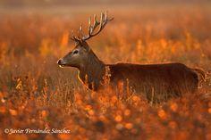 Early morning hunt @Javier Fernandez Sanchez