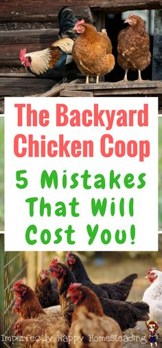 The Backyard Chicken Coop - 5 Mistakes That Will Cost You! The things you should know before you buy or build your coops.