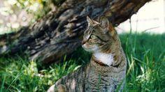 Diabetes Mellitus in Dogs & Cats